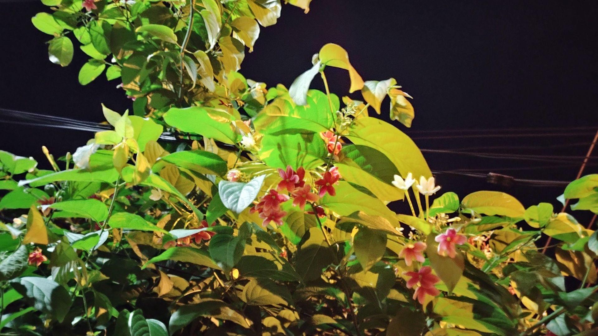 Foto tirada de uma planta tirada de noite, com a câmera principal e modo noturno