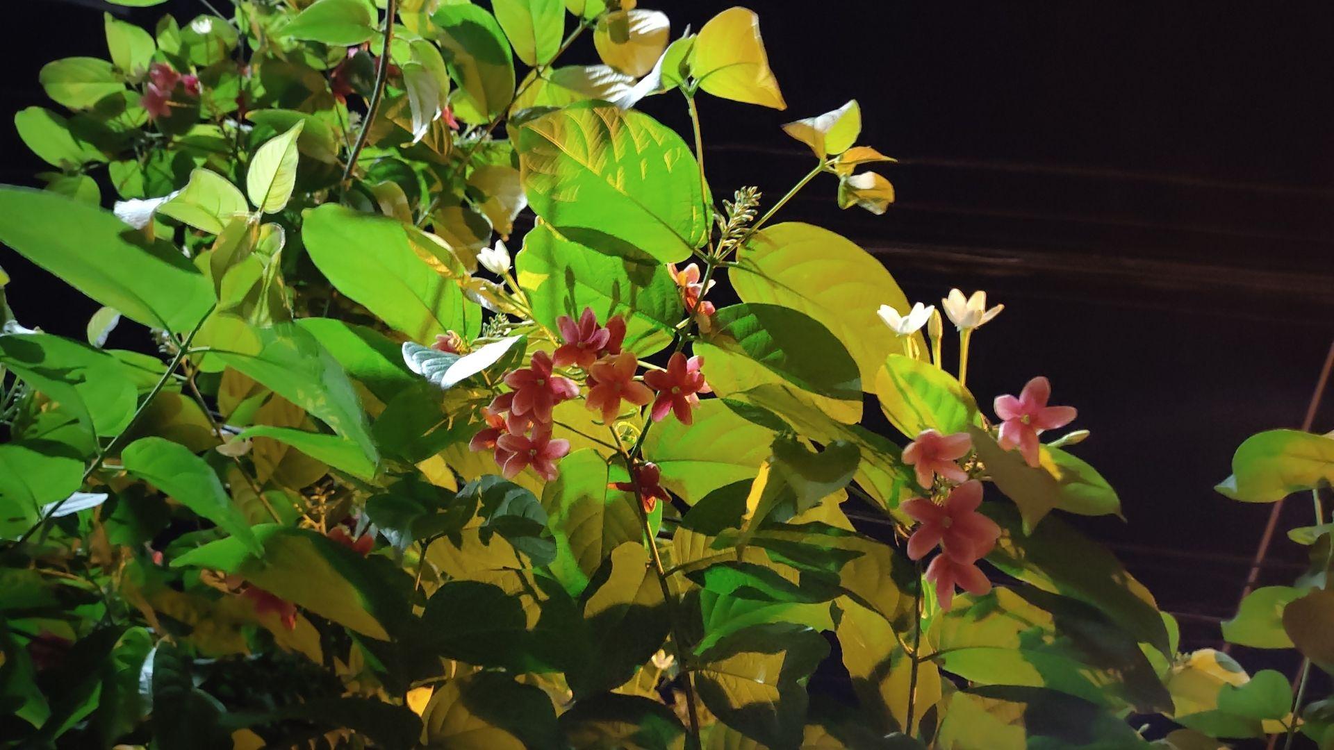 Foto tirada de uma planta tirada de noite e com a câmera principal